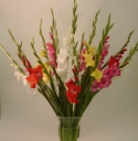 18 fabulous locally grown gladioli