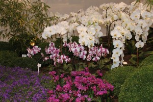 Orchid plants in white and purples