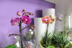 Sweet Mini Orchids