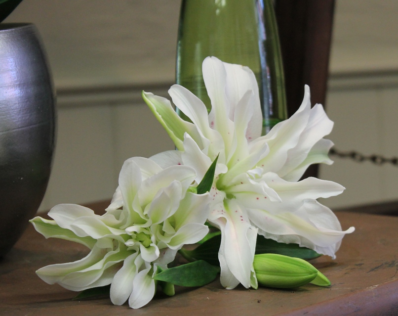 Roselily - a new variety of lily with many petals