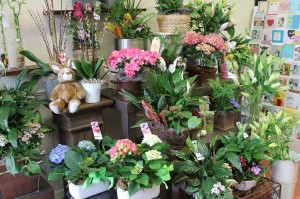 Easter plants for pickup or delivery