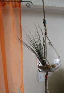 Macrame hanger with air plant