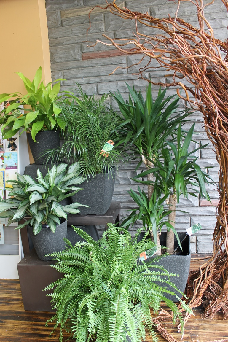 New indoor plants for sale at Martin's in Toronto
