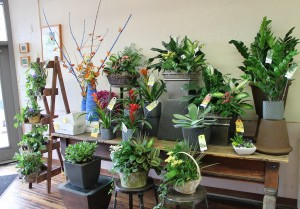 Bromeliad, ZZ plant, planter baskets