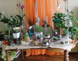 Orchids, succulents, cacti