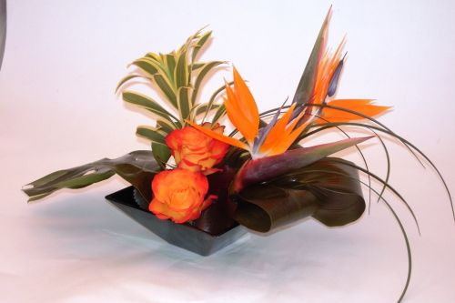 Bright Birds of Paradise Centrepiece